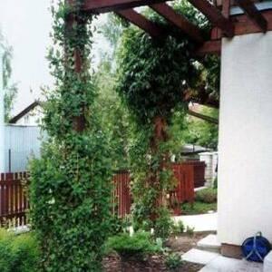 Опоры для вертикального озеленения